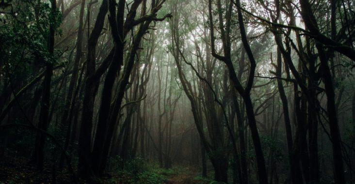 Was sind Primärwälder und warum müssen wir diese schützen